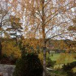 AutumnDark